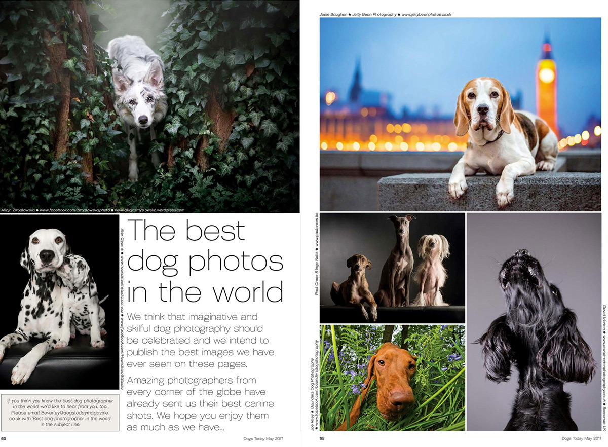 dogs-today-best-photographers-feature