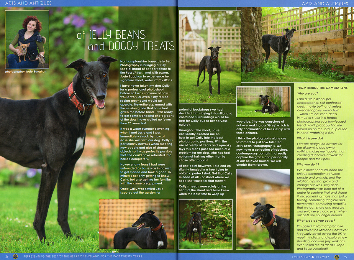 four-shires-greyhound-feature