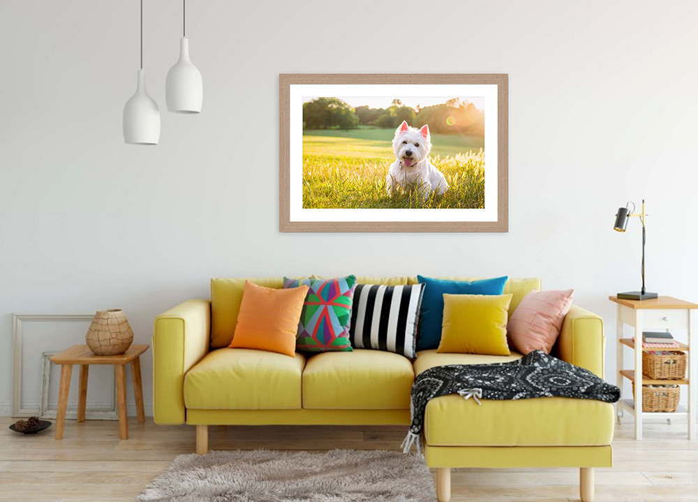 framed-westie-photo-above-sofa