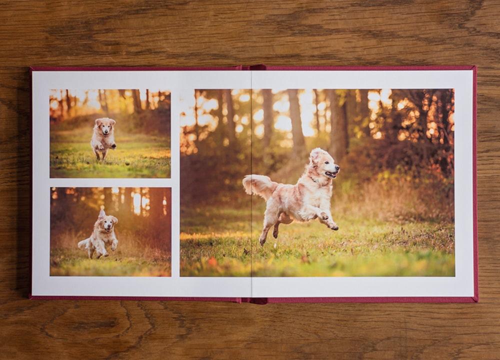 photo-album-layout-with-golden-retriever