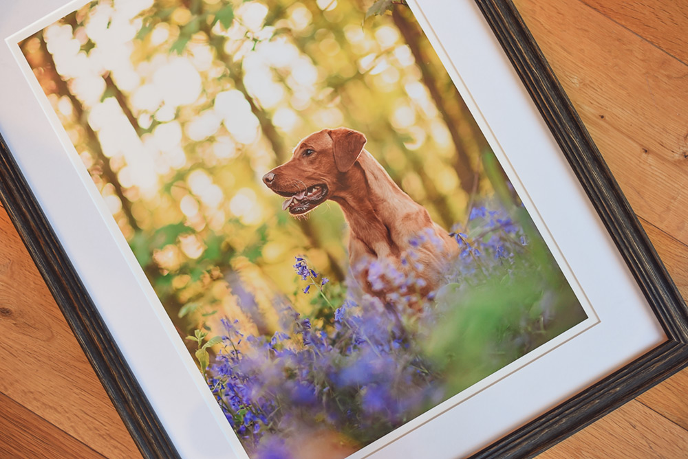 Wooden framed print of dog in bluebells