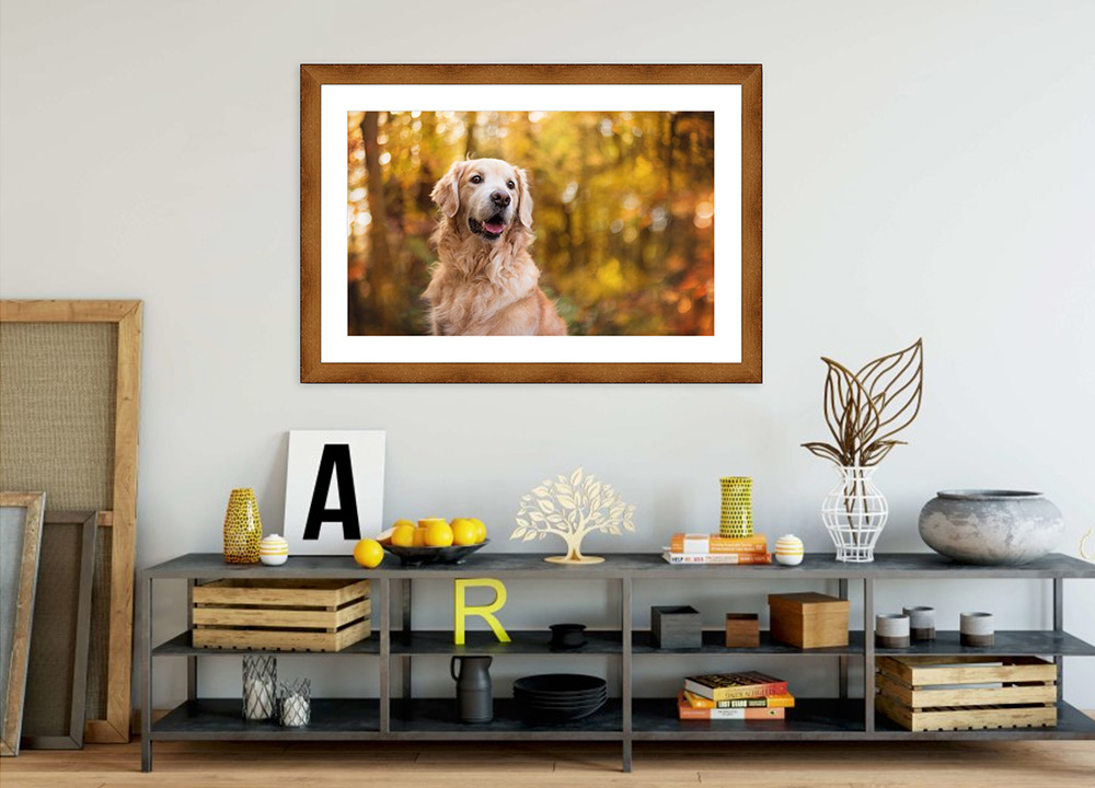Wooden framed print of golden retriever hanging on wall
