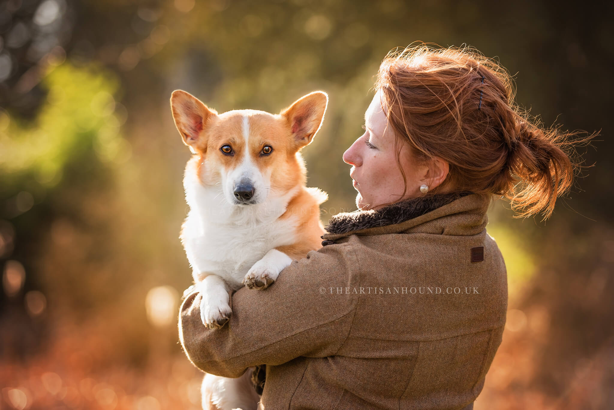 Corgi-looking-over-owners-shoulder