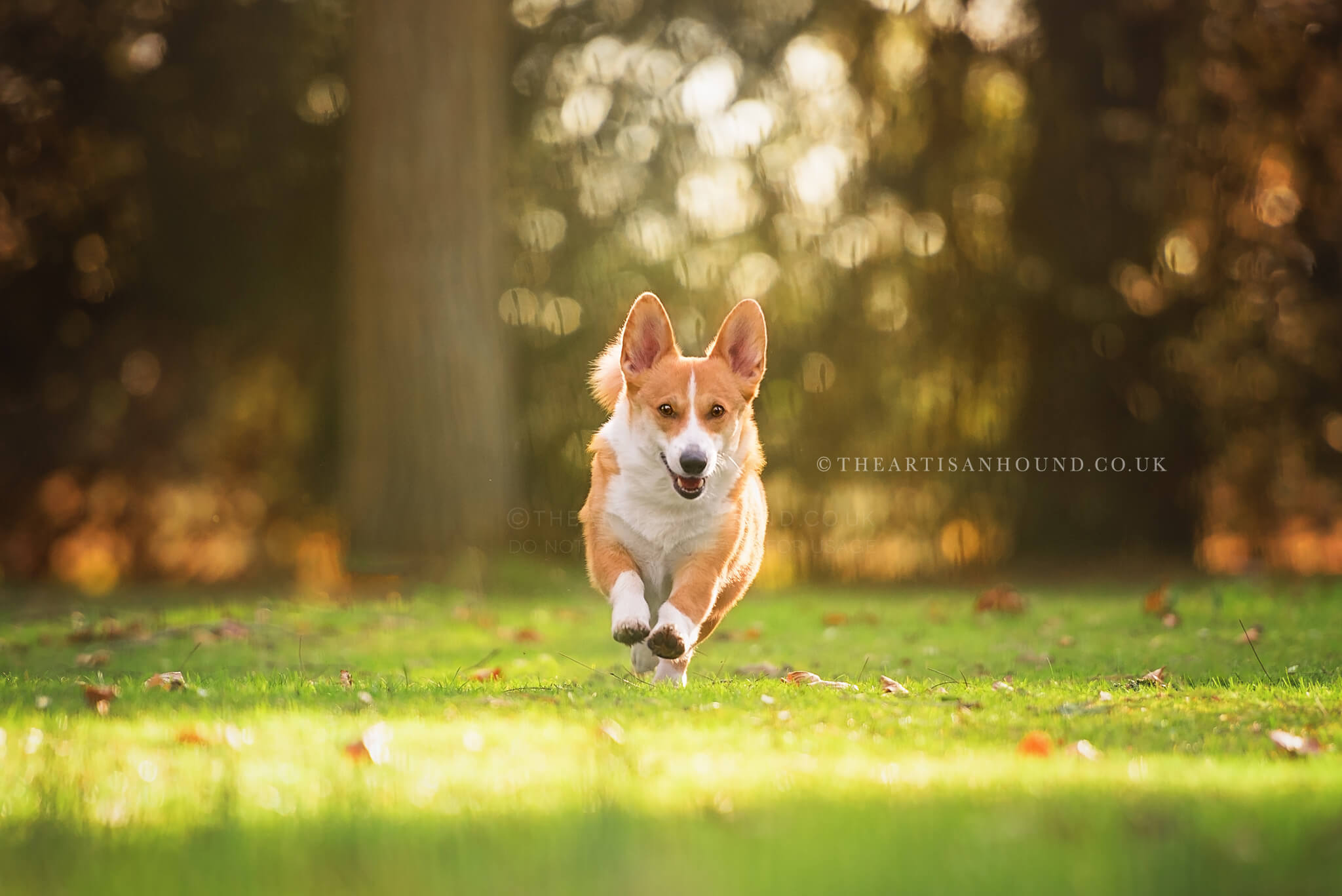 Dog-photography-Northamptonshire