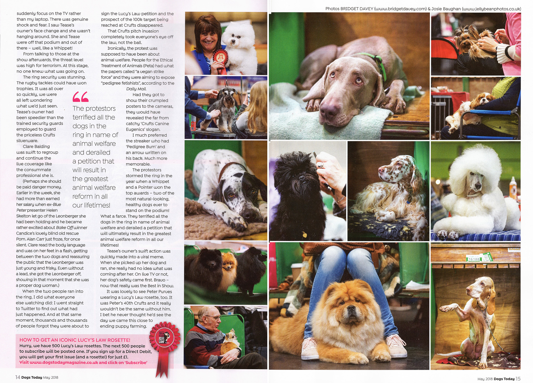 Dogs-Today-Crufts-feature-2018