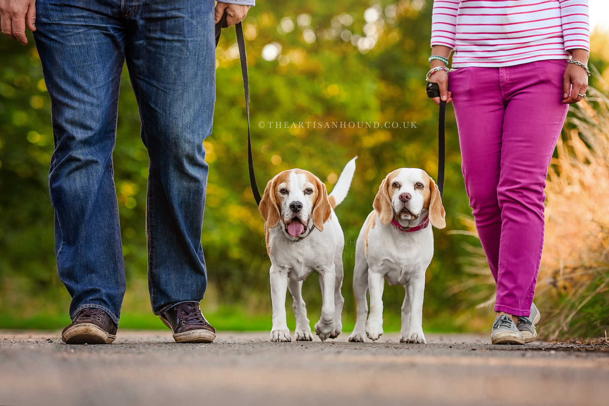 Dogs-walking-with-owners