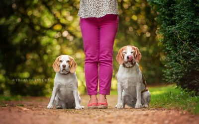 SUMMER WITH THE BEAGLES: PORTHOS & LUCY