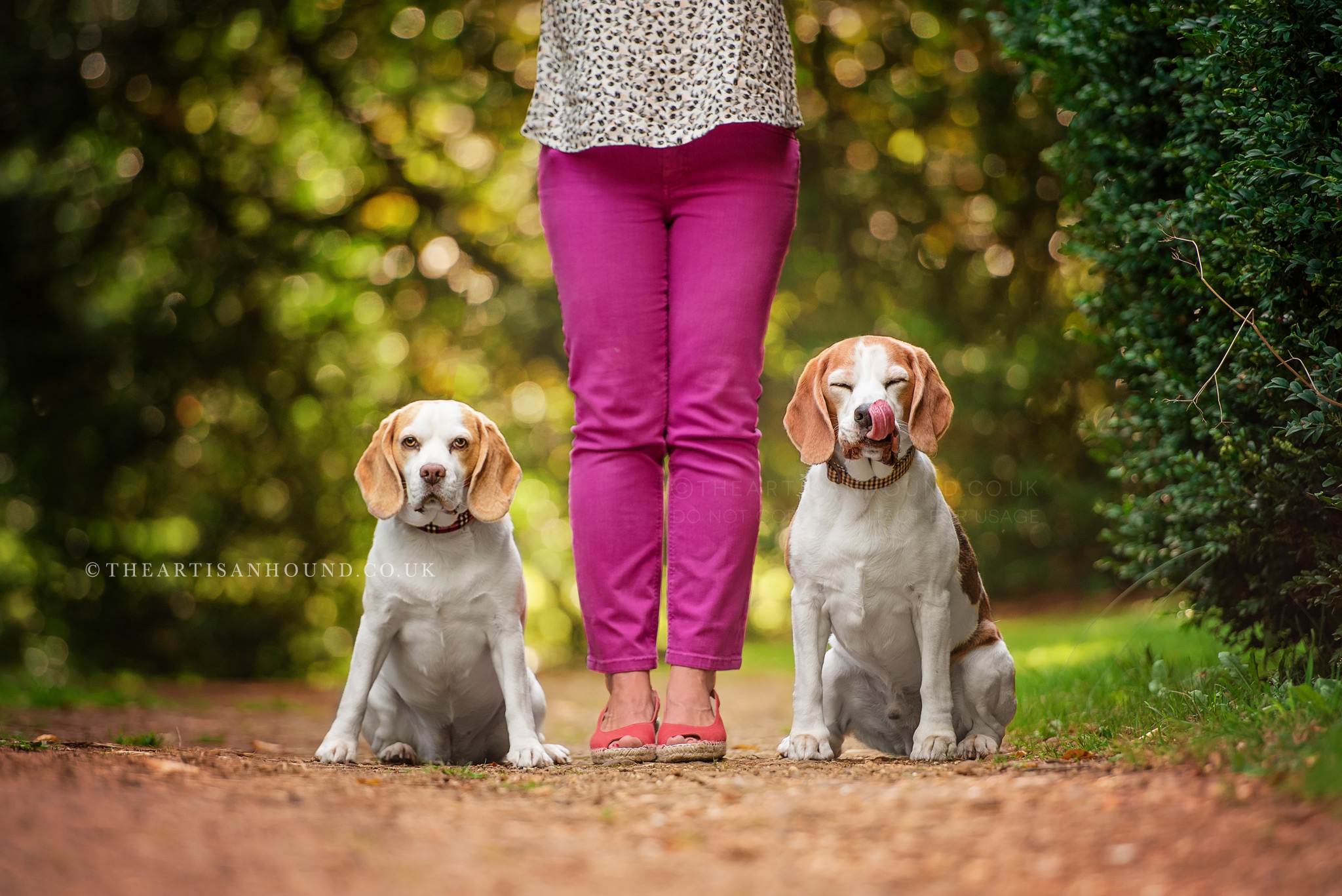 Two dogs sitting at owners feet