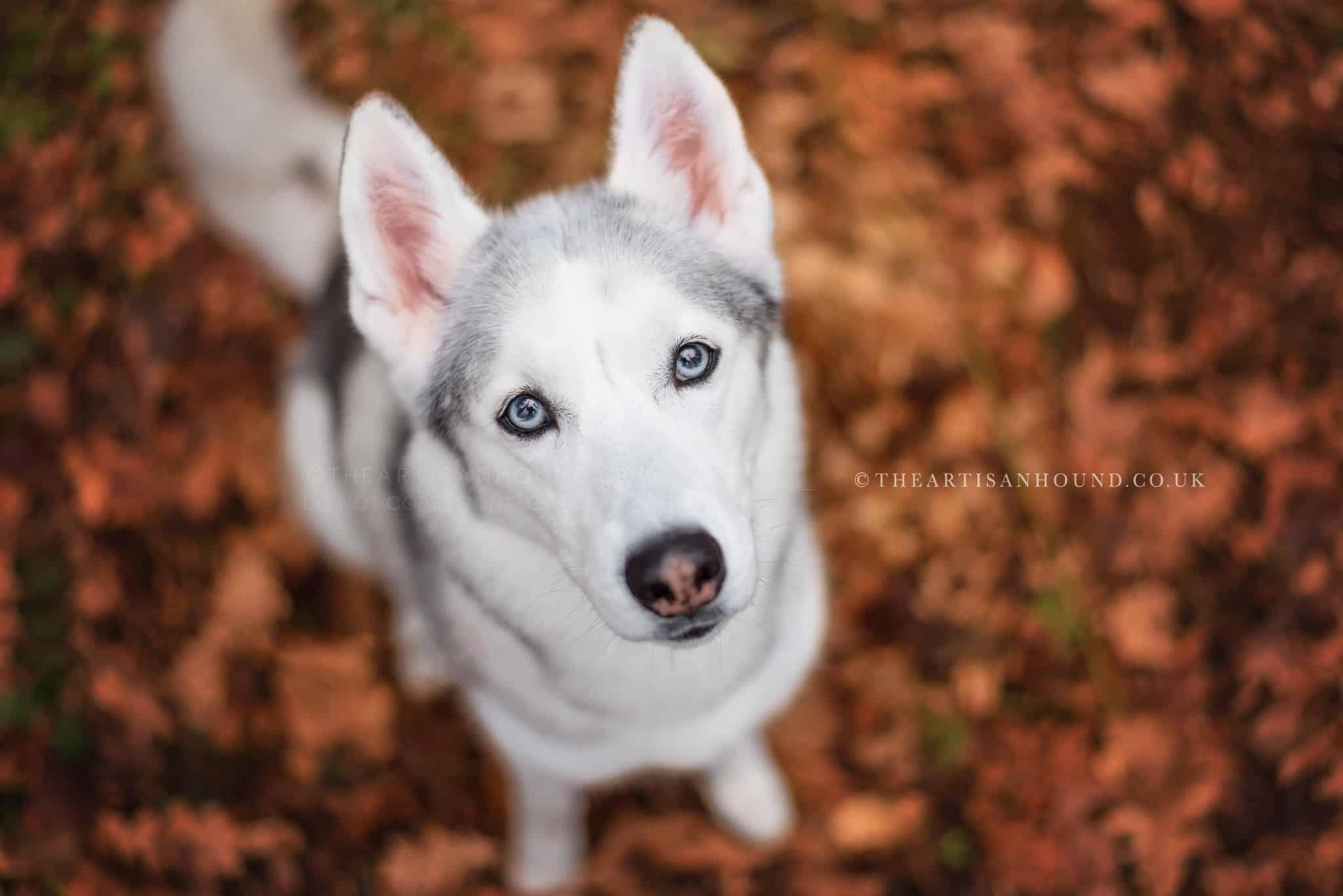 dog-looking-up-at-camera