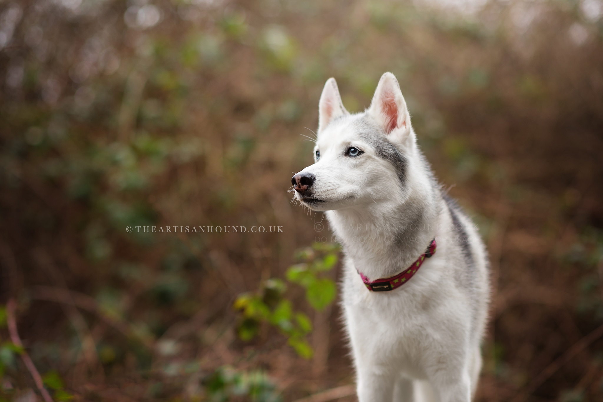 dog-photography-leicester