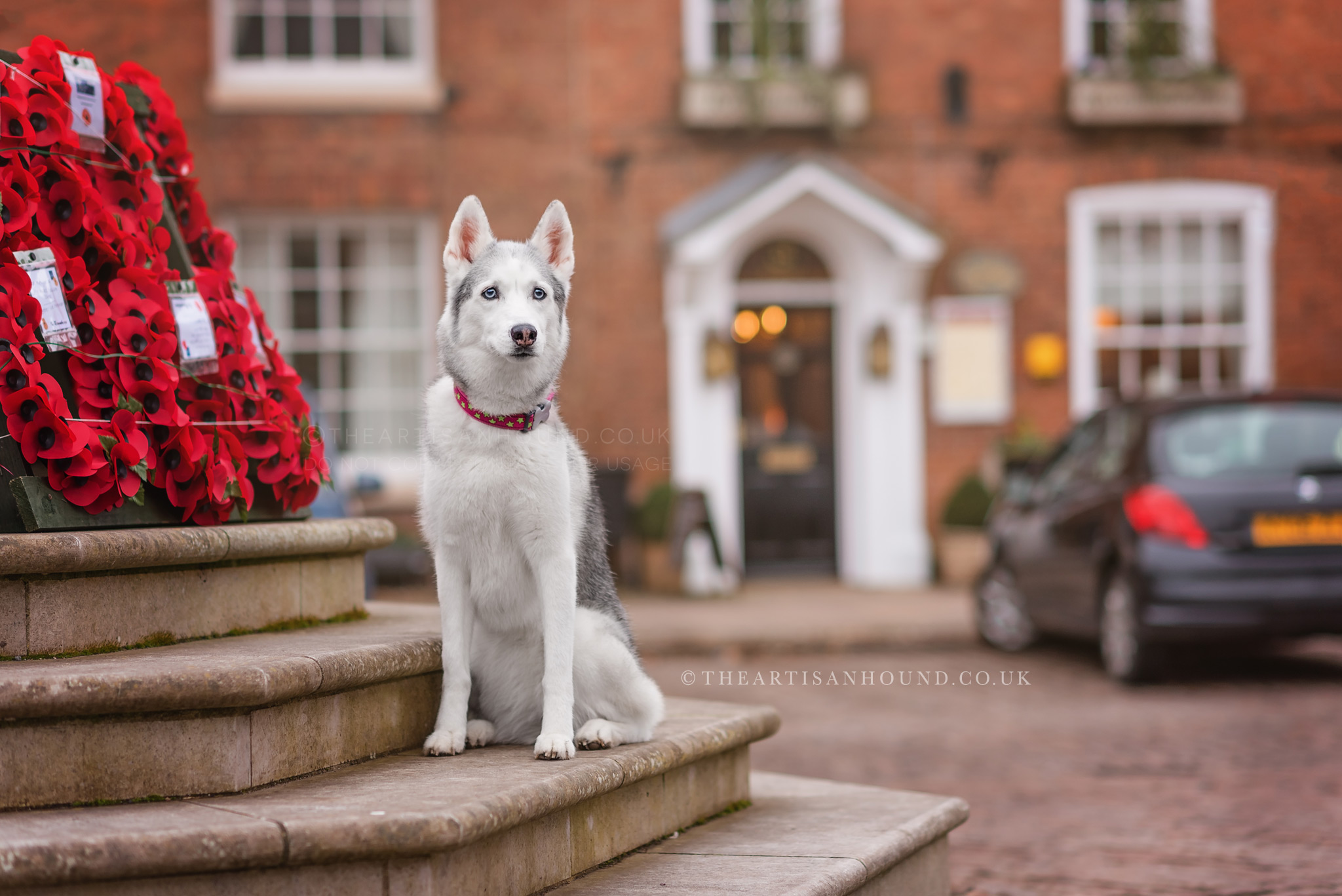 dog sitting on memorial in village