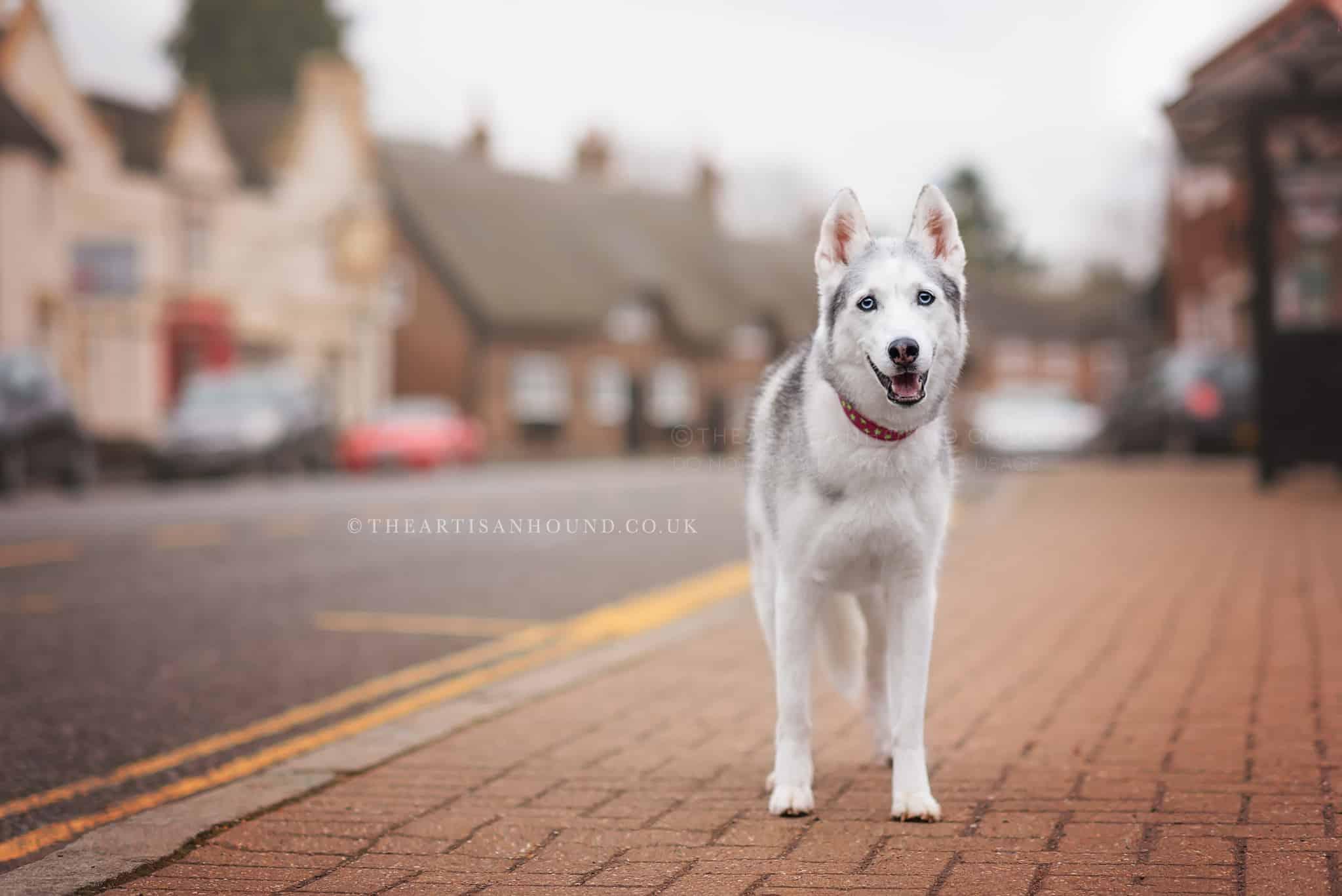 dog-standing-in-village-street