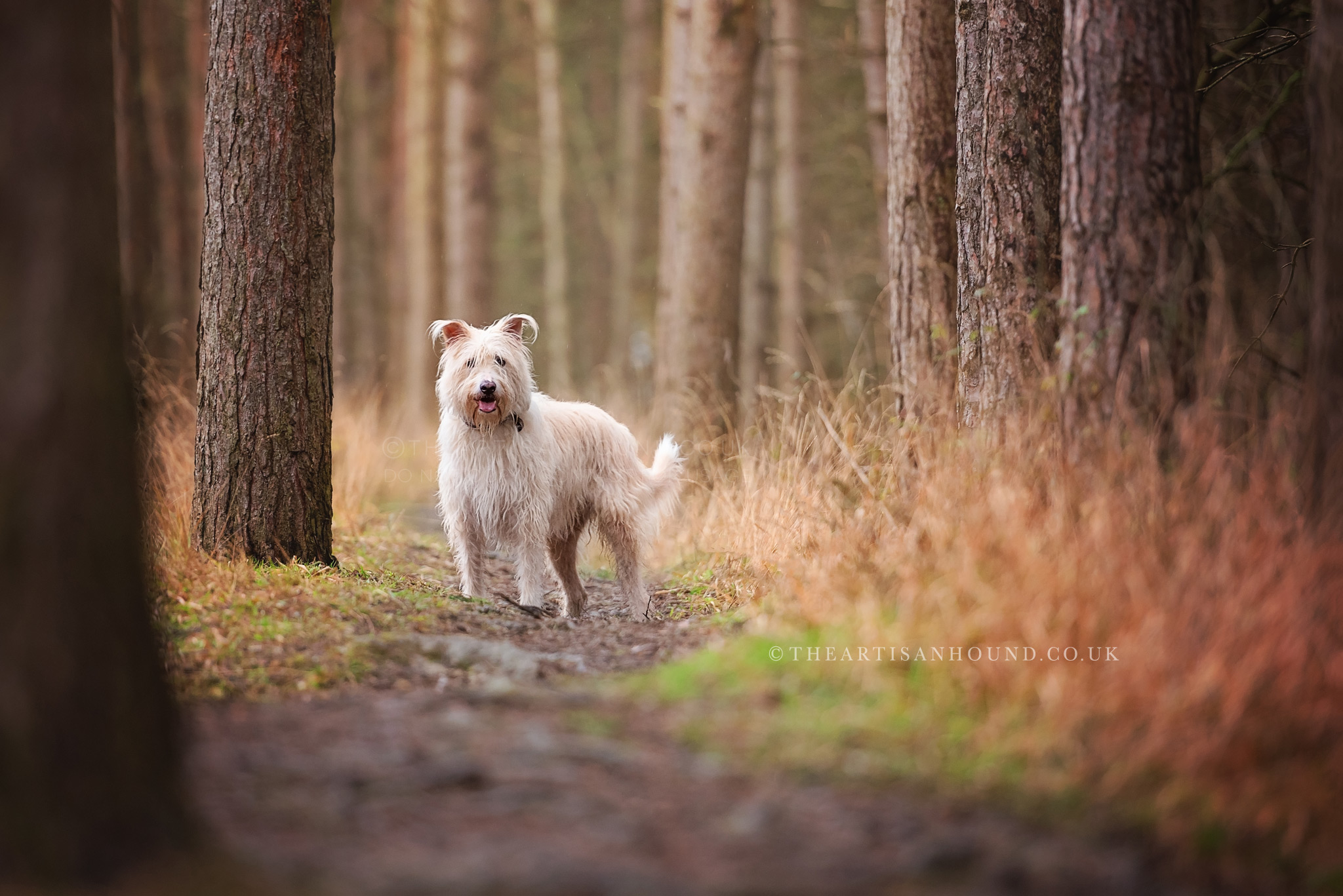 rough coated crossbreed dog standing in woods