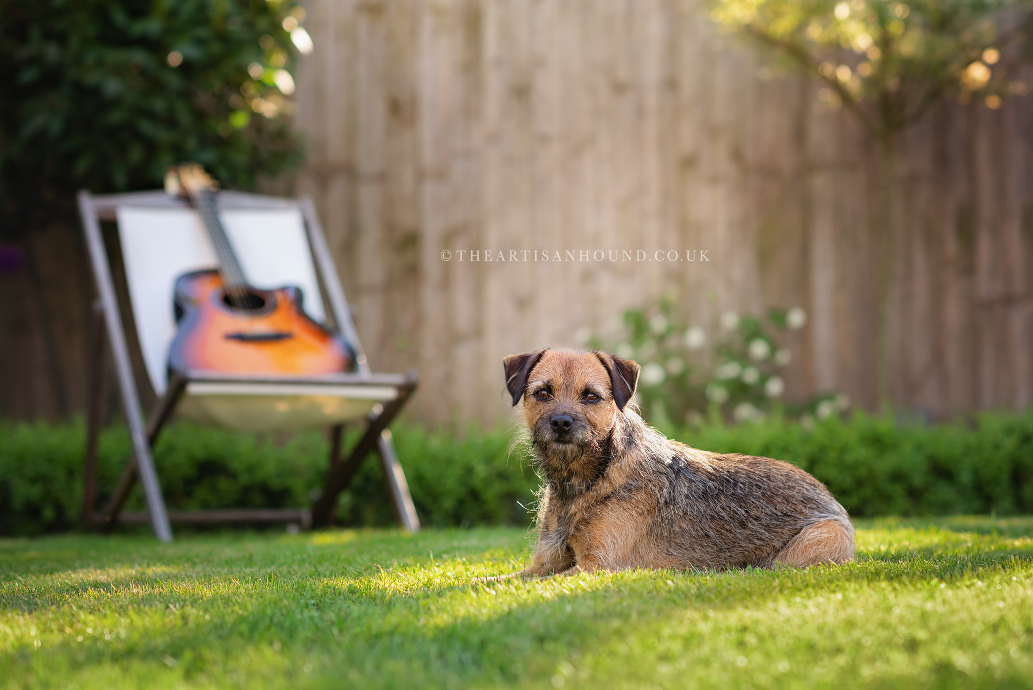 border terrier sitting in garden with chair and guitar
