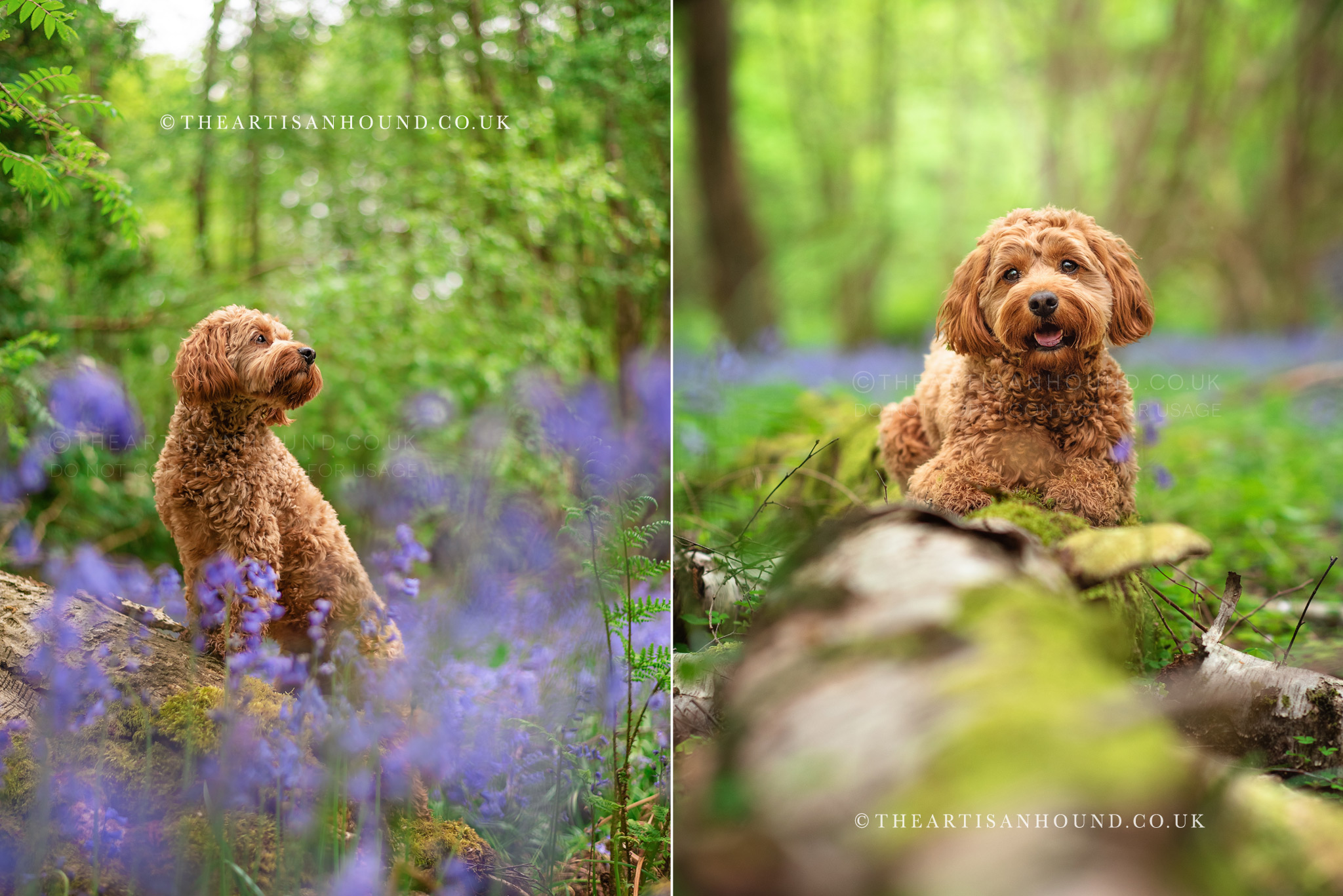 Dog photographer Coventry