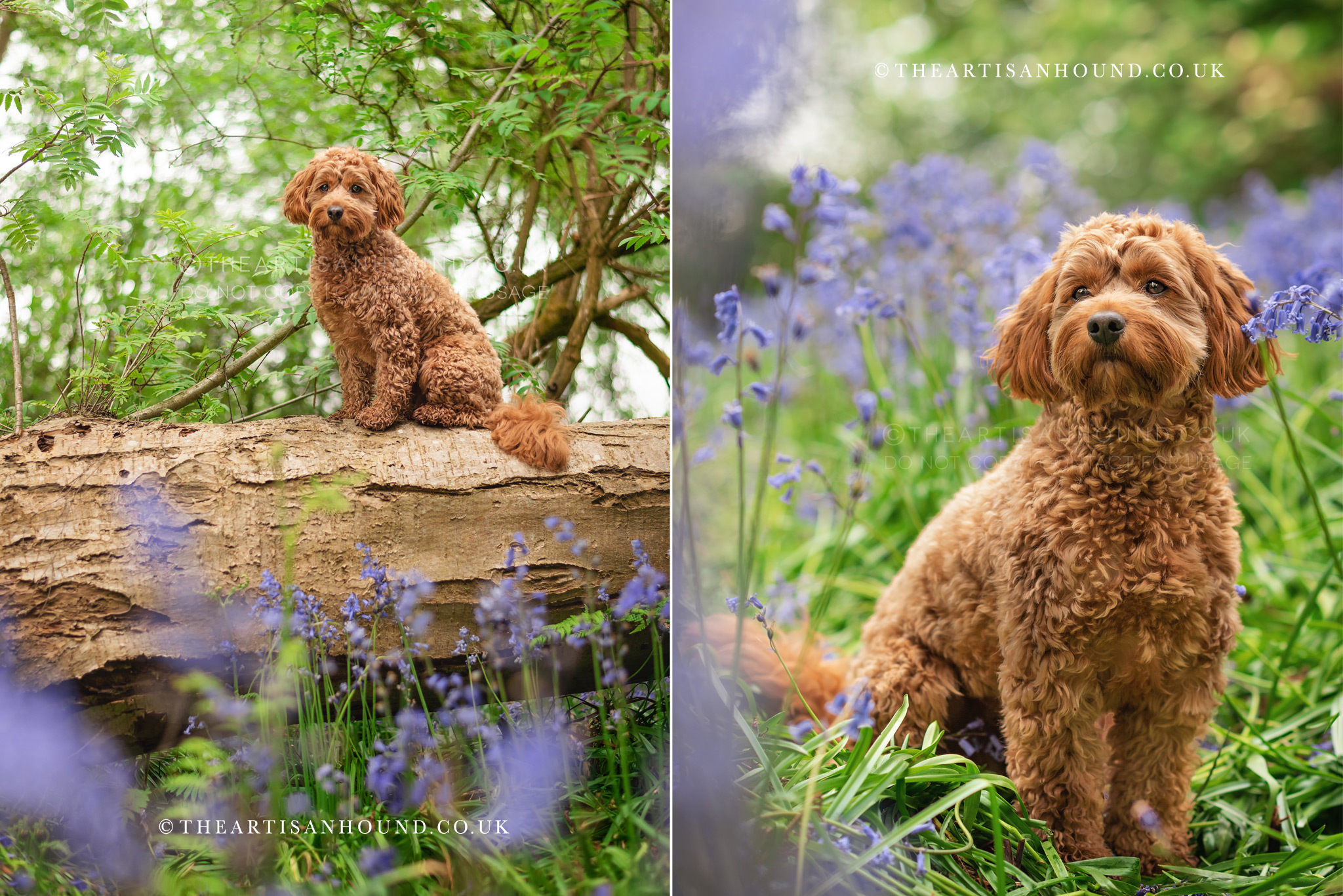 Dog photographer Northamptonshire