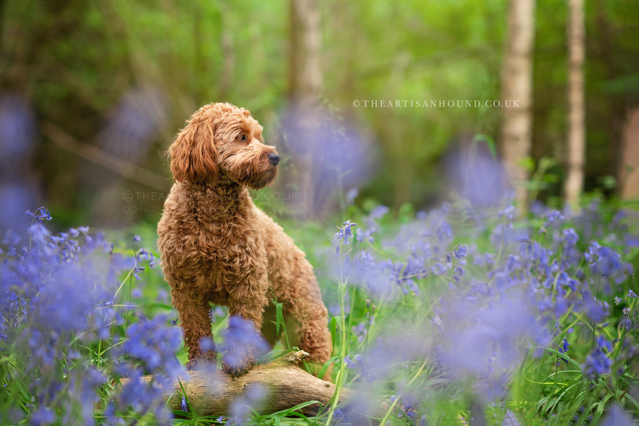 dog-standing-on-log-on-spring-woods