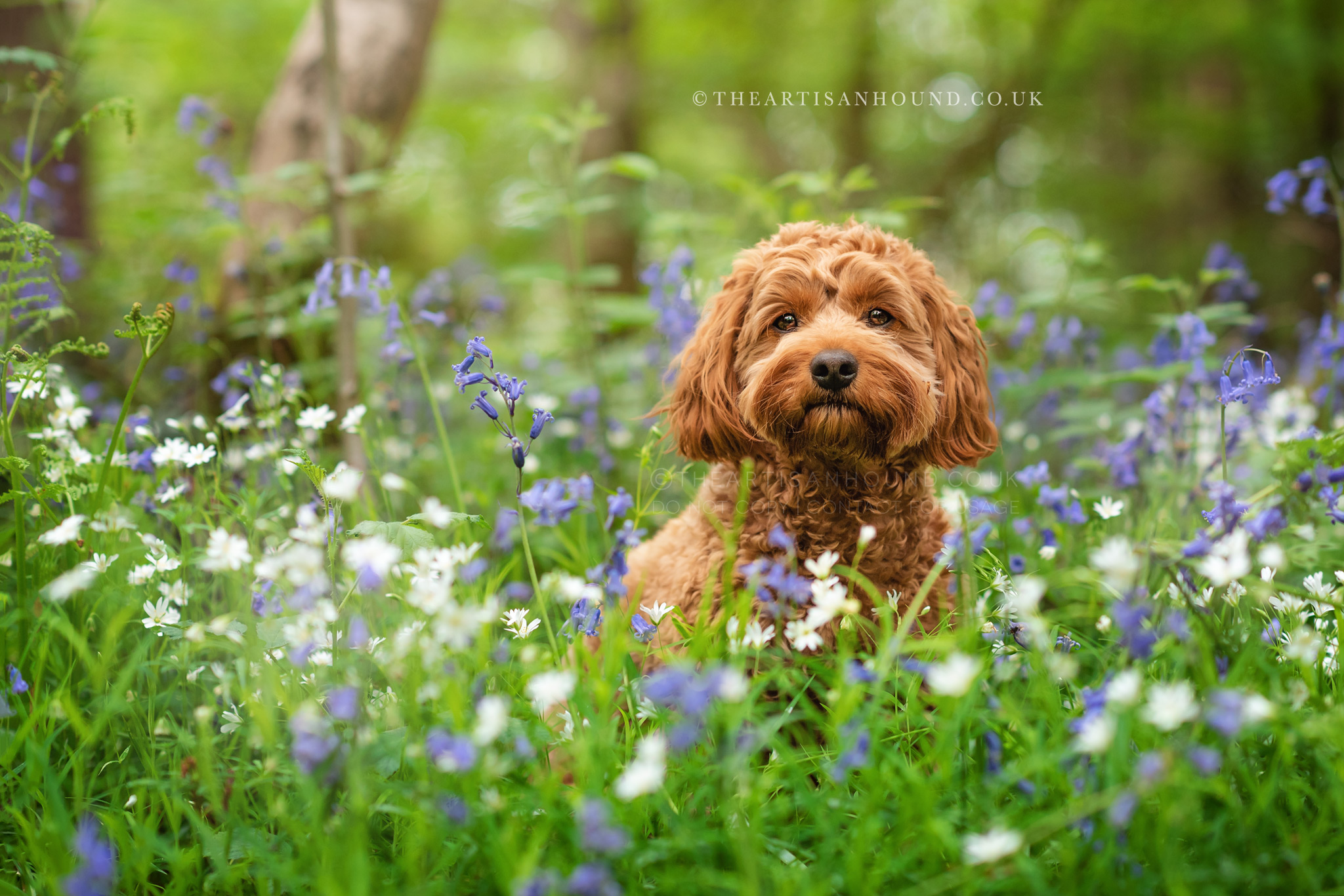 Puppy sitting in blue and white flowers