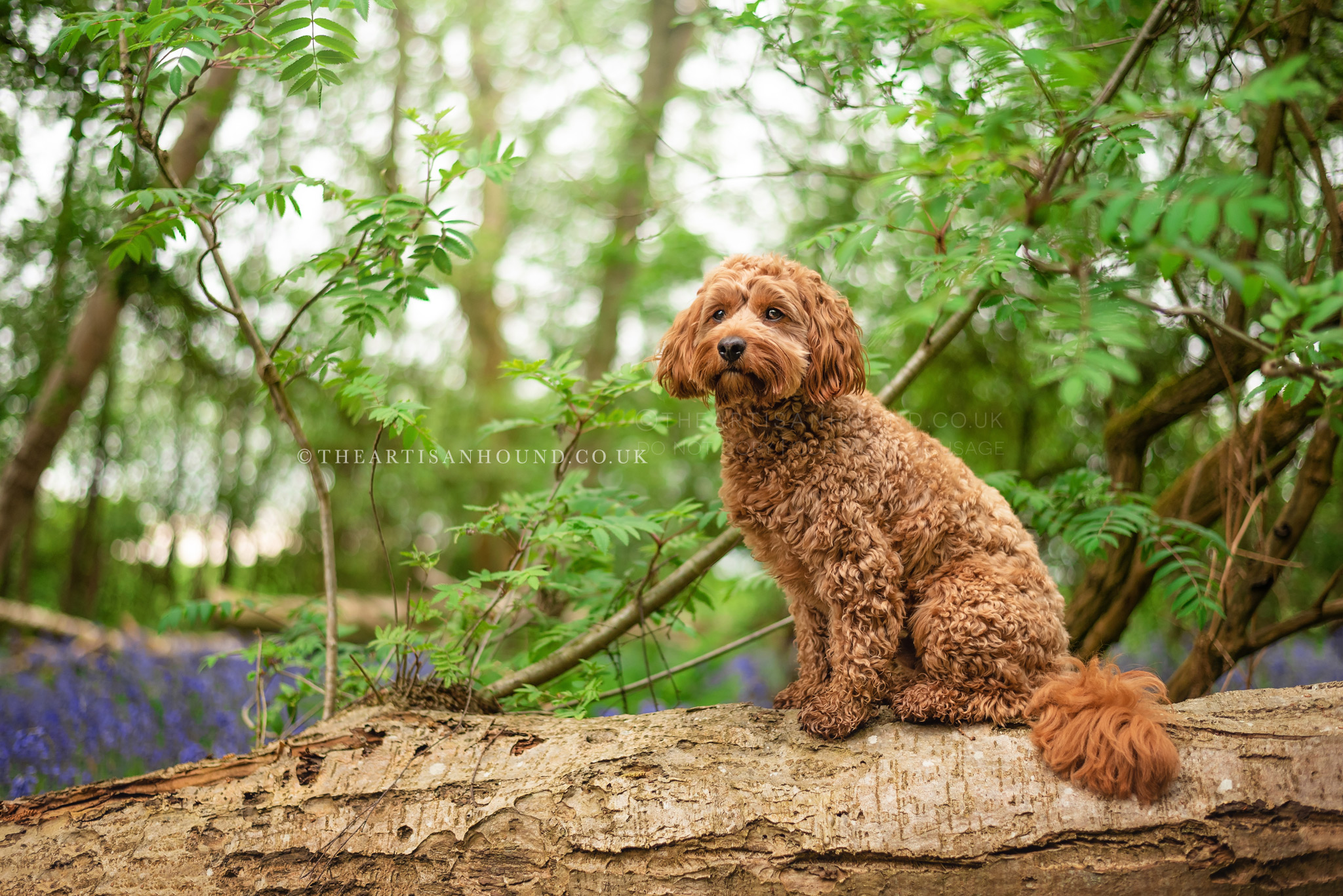 red-dog-sitting-on-log-in-woods