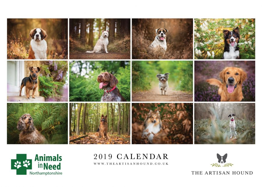 charity photo calendar layout featuring 12 dogs