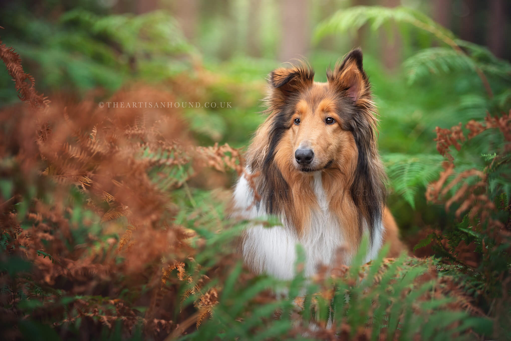 portrait of dog Harlestone Firs Northampton