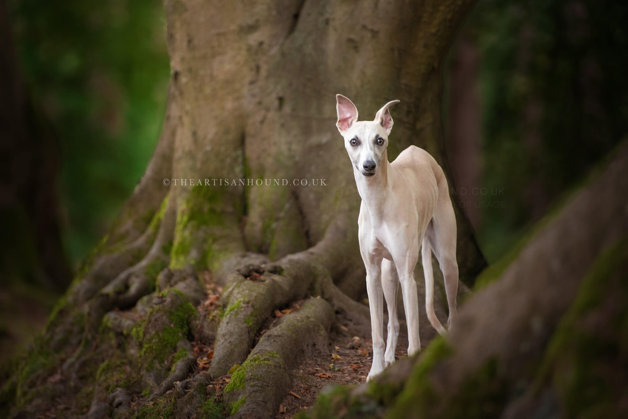 Whippet dog standing by tree