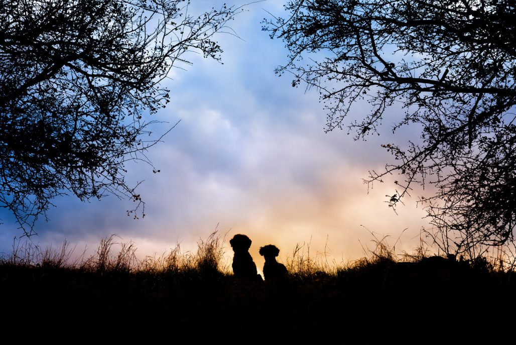 two little dog silhouettes in Northamptonshire countryside