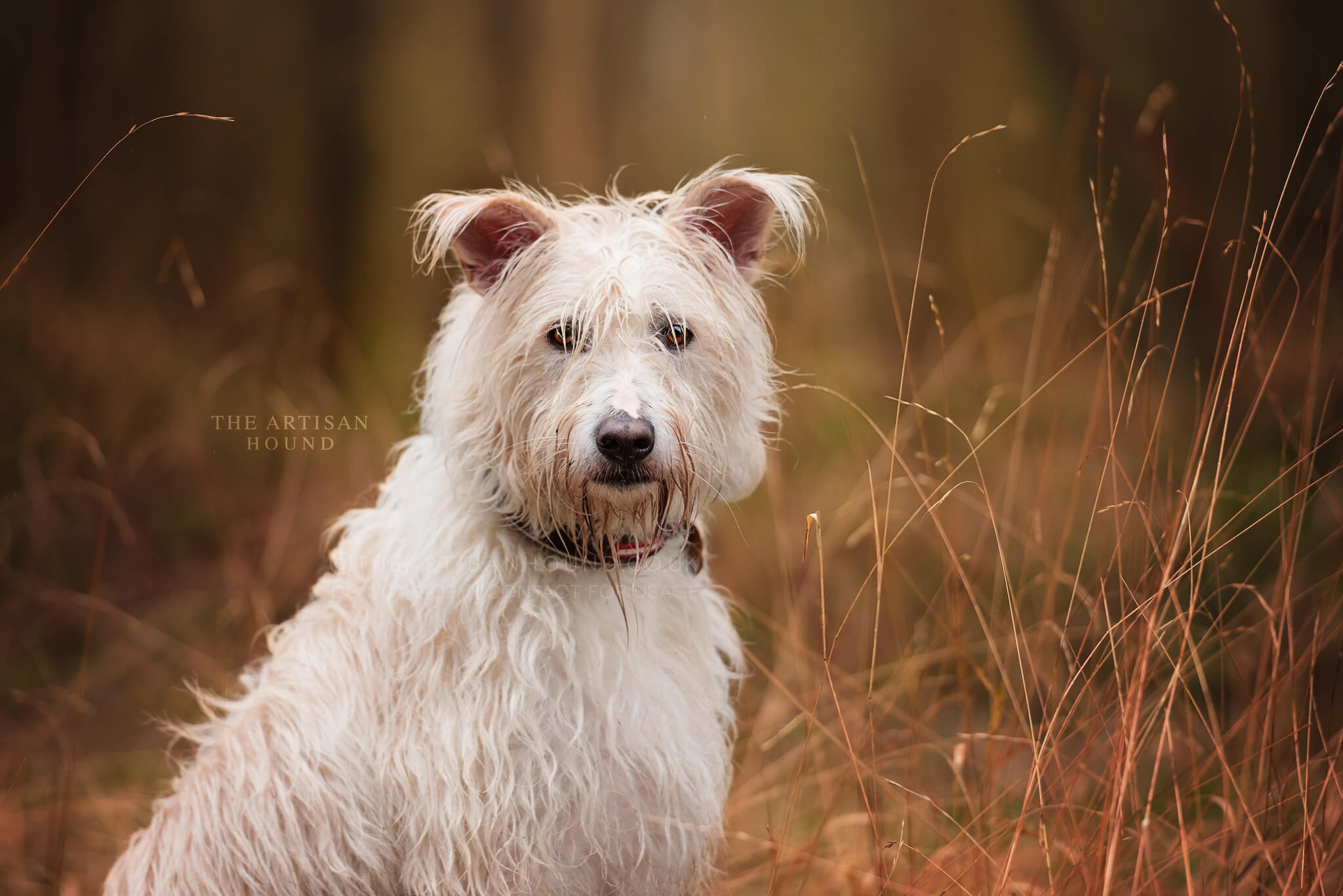 Portrait photograph of mixed breed dog in tall grass