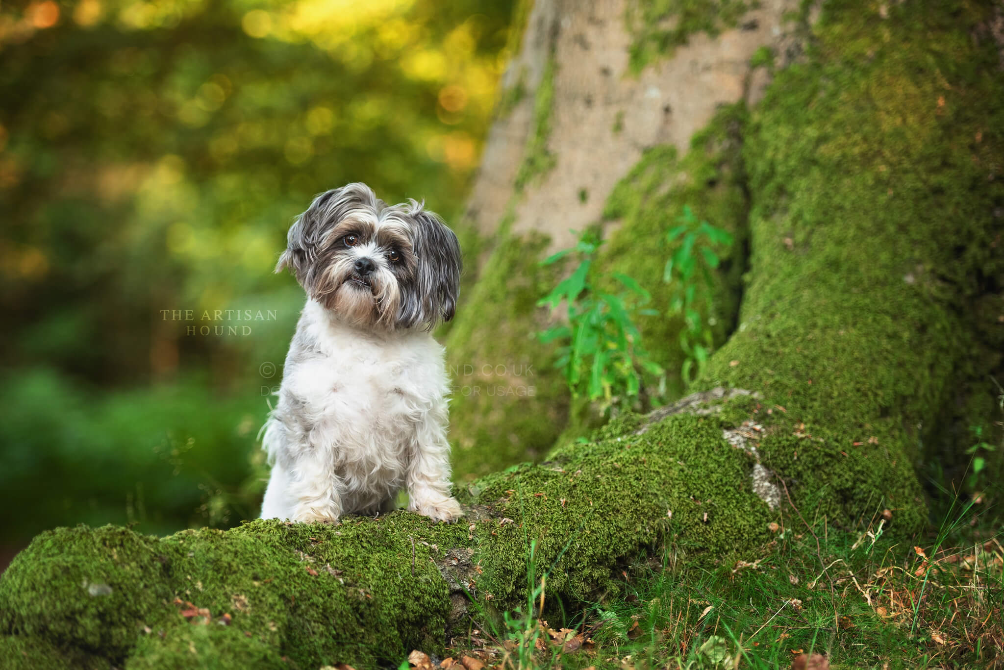 Grey and white dog standing on mossy tree root