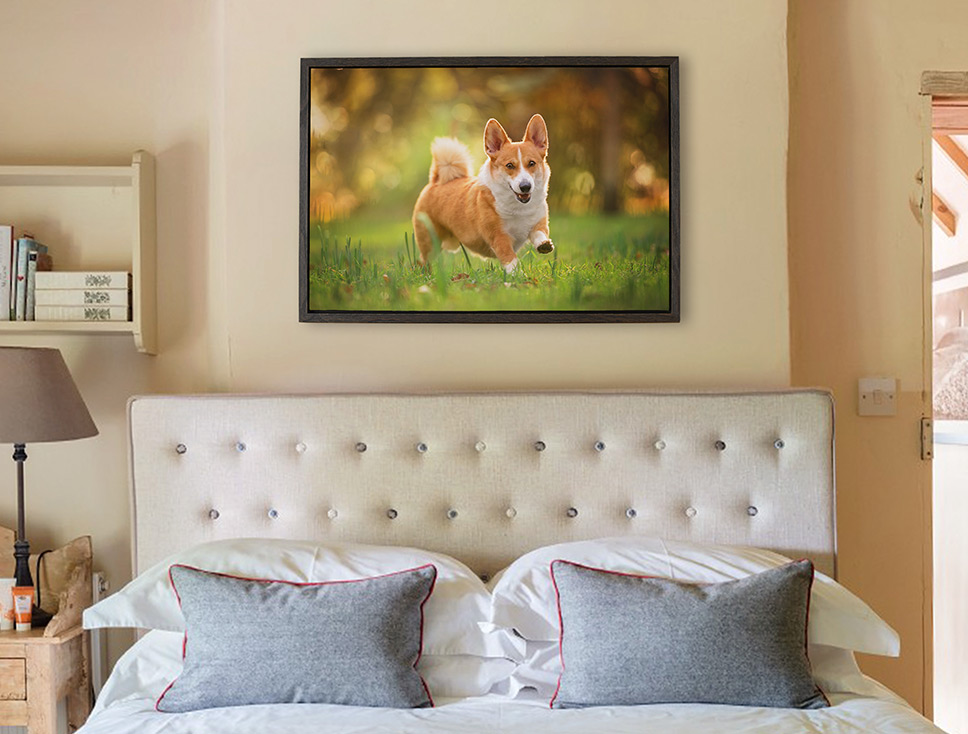 Framed canvas of running corgi hanging on bedroom wall