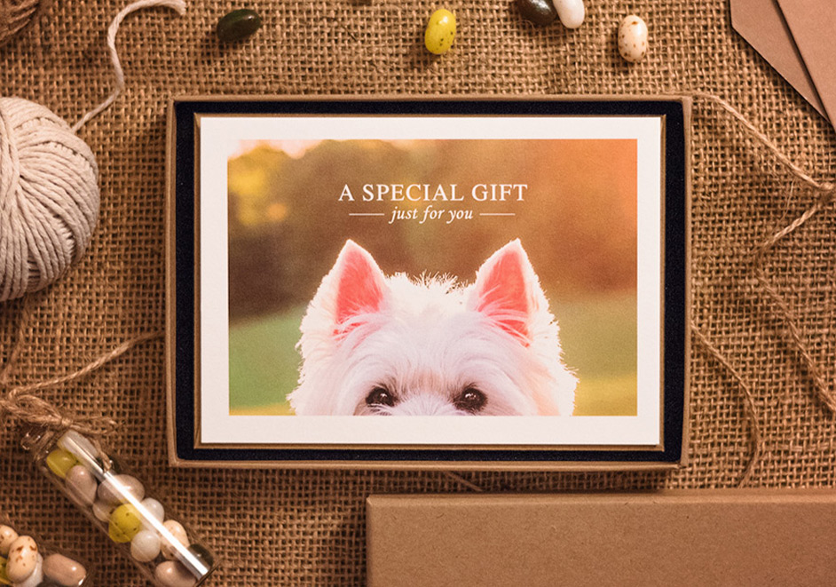 Gift certificate for a dog photography experience in Northamptonshire