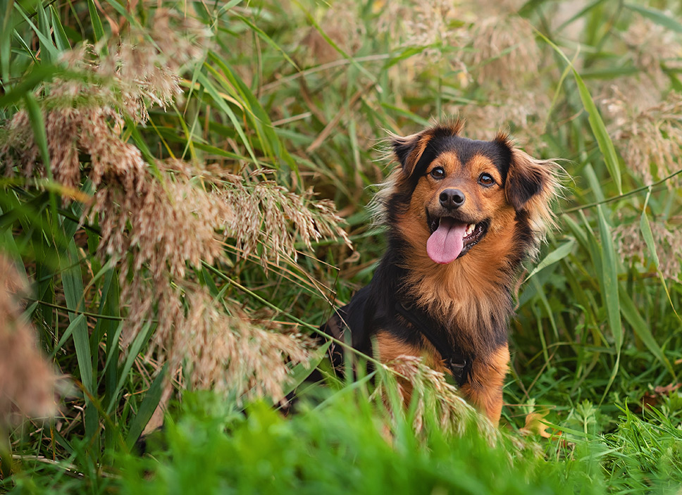 Small crossbreed dog sitting in reed bed