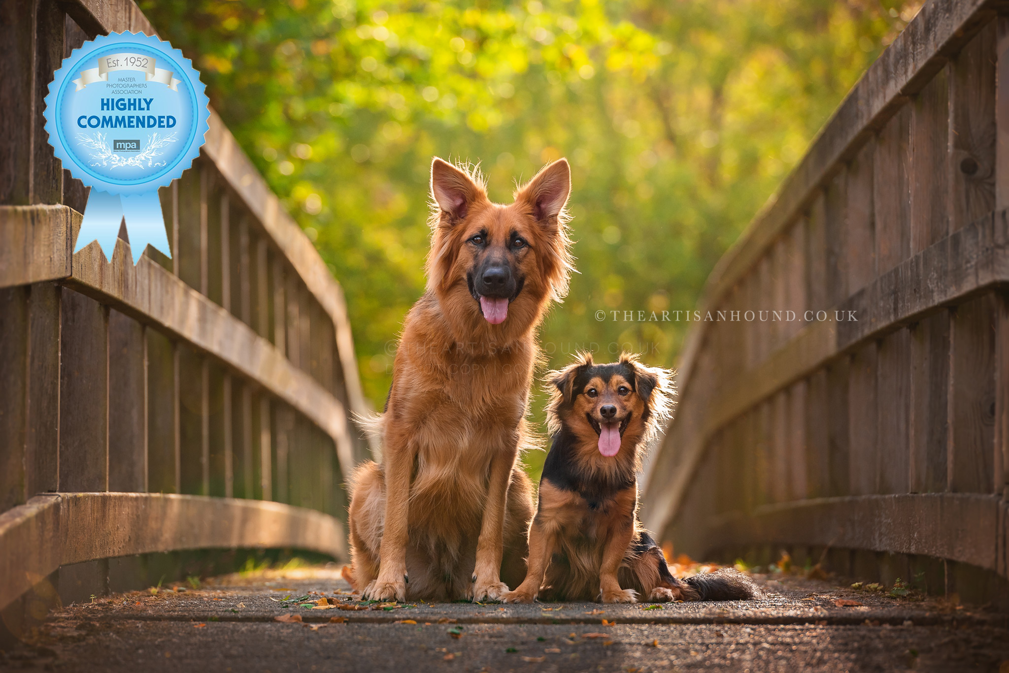 Two dogs sitting on bridge in Kettering parkland