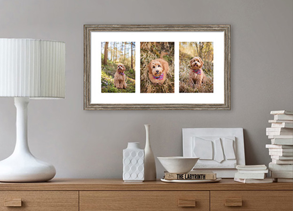 framed cockapoo print trio above sideboard
