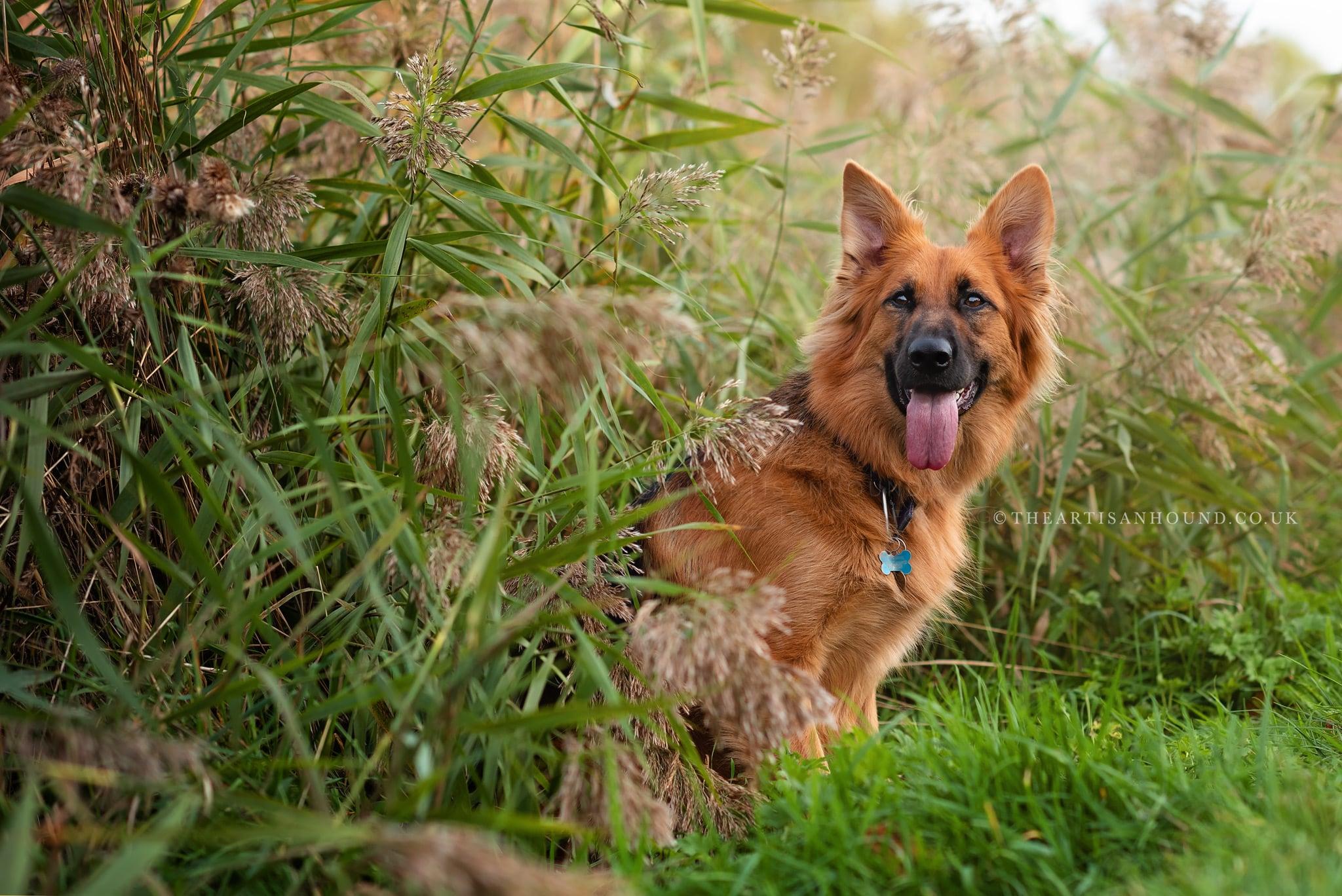 kettering dog photographer 0585