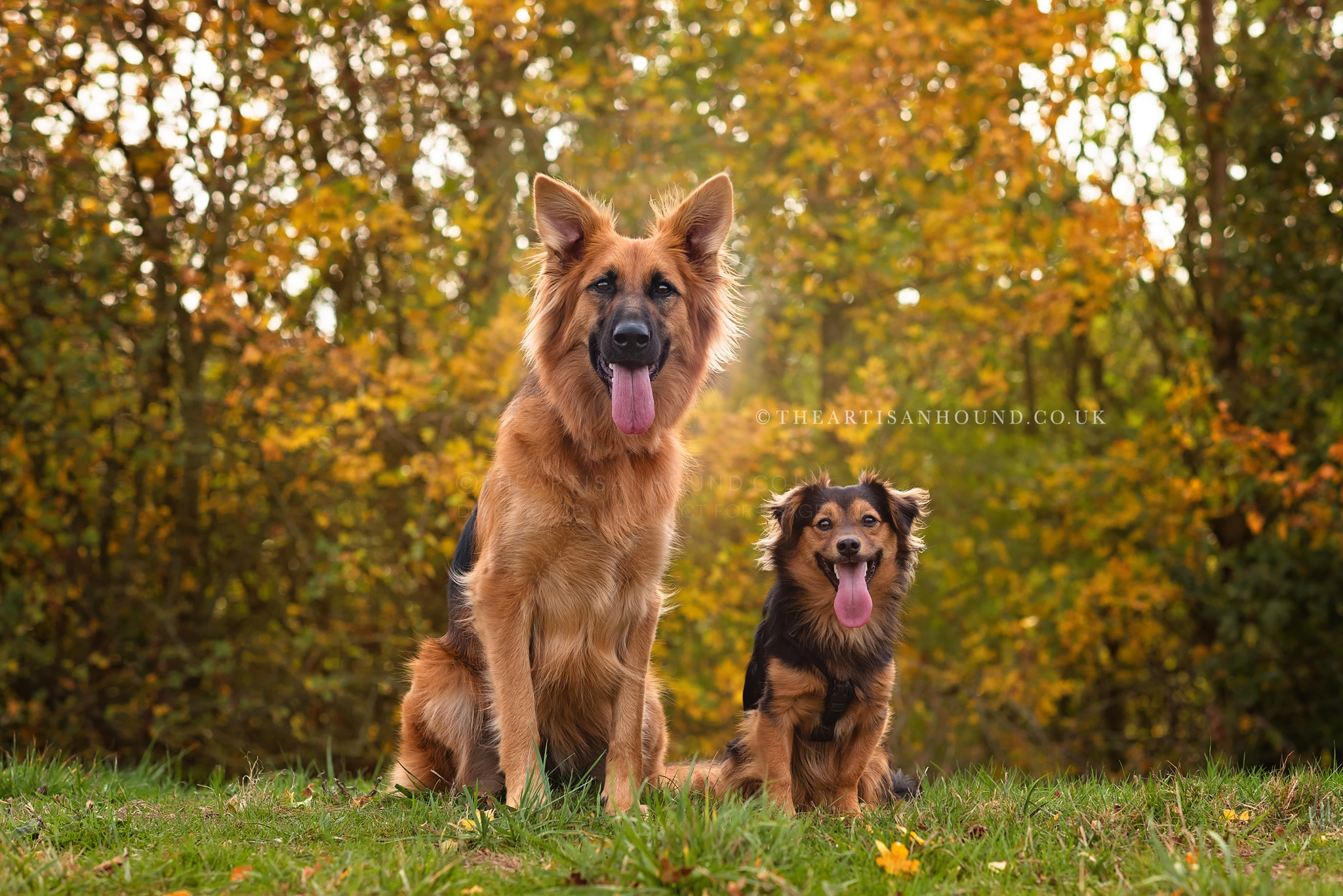 kettering dog photographer 0646