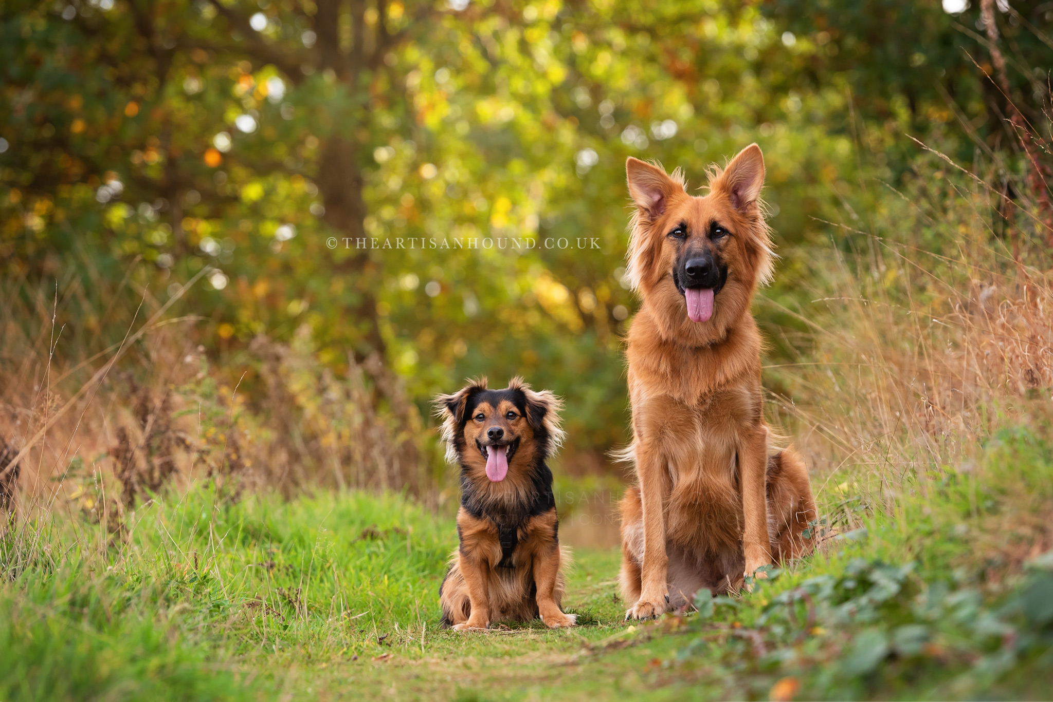 Two dogs sitting side by side in Northants park