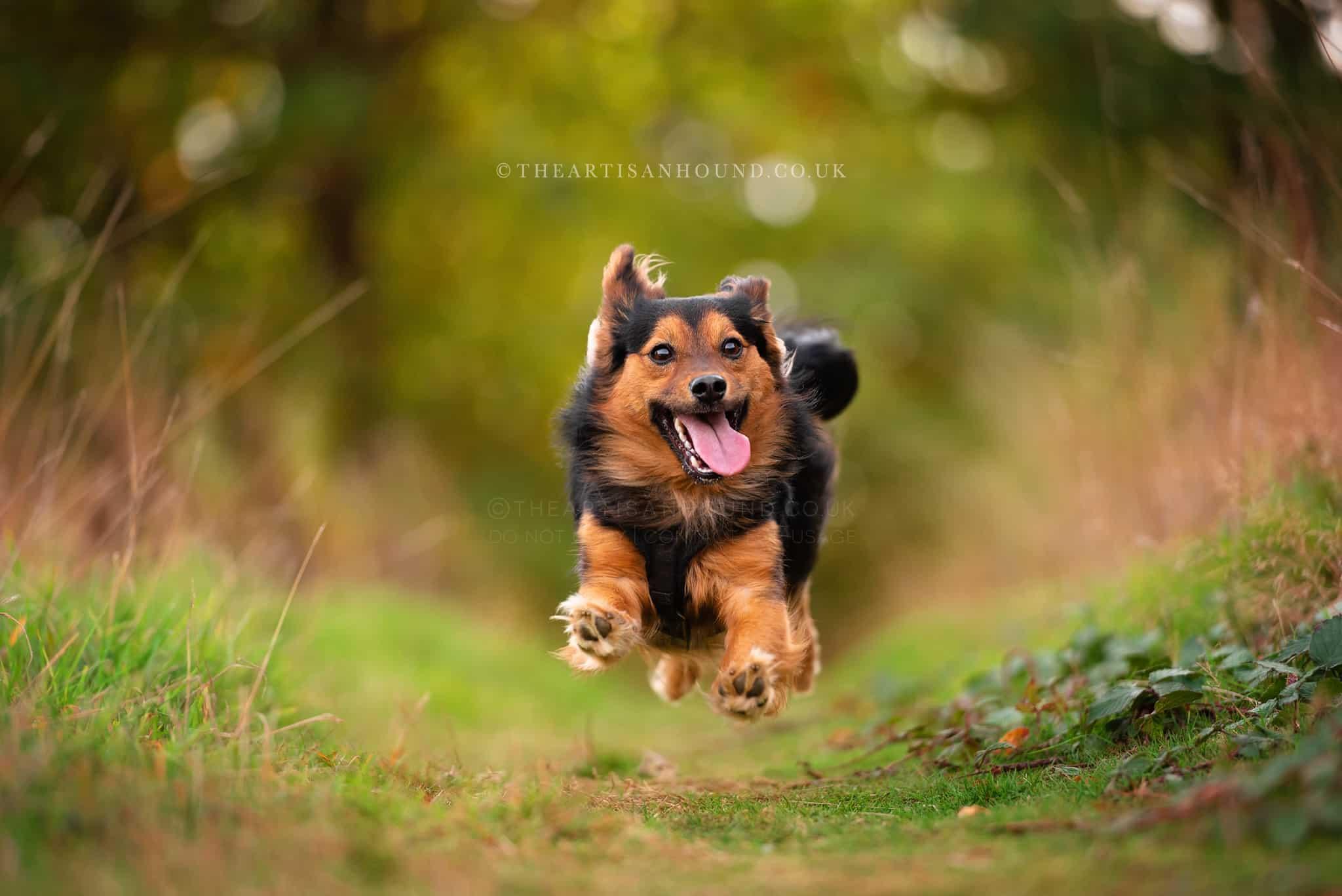 kettering dog photographer 0908