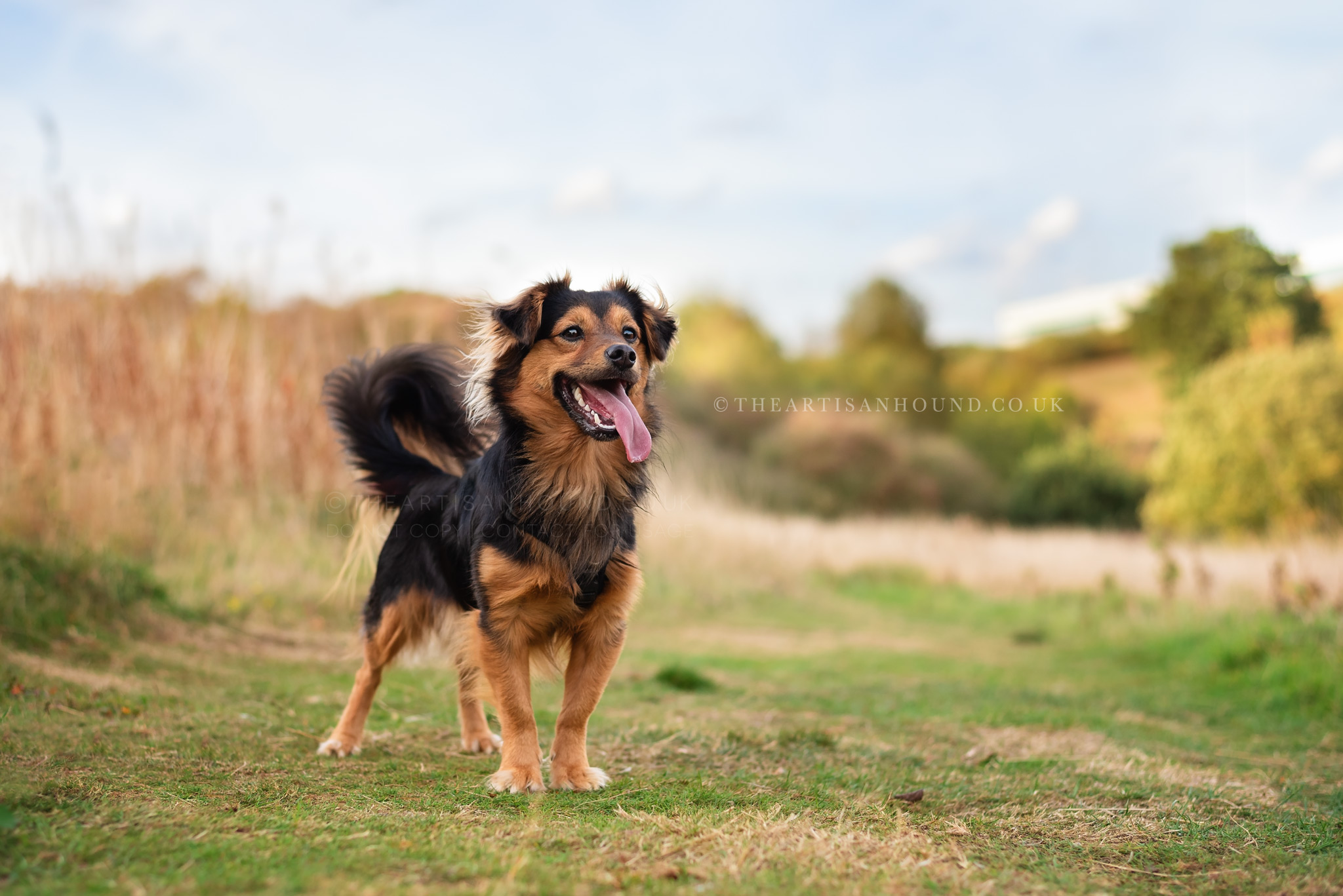 kettering dog photographer 0944