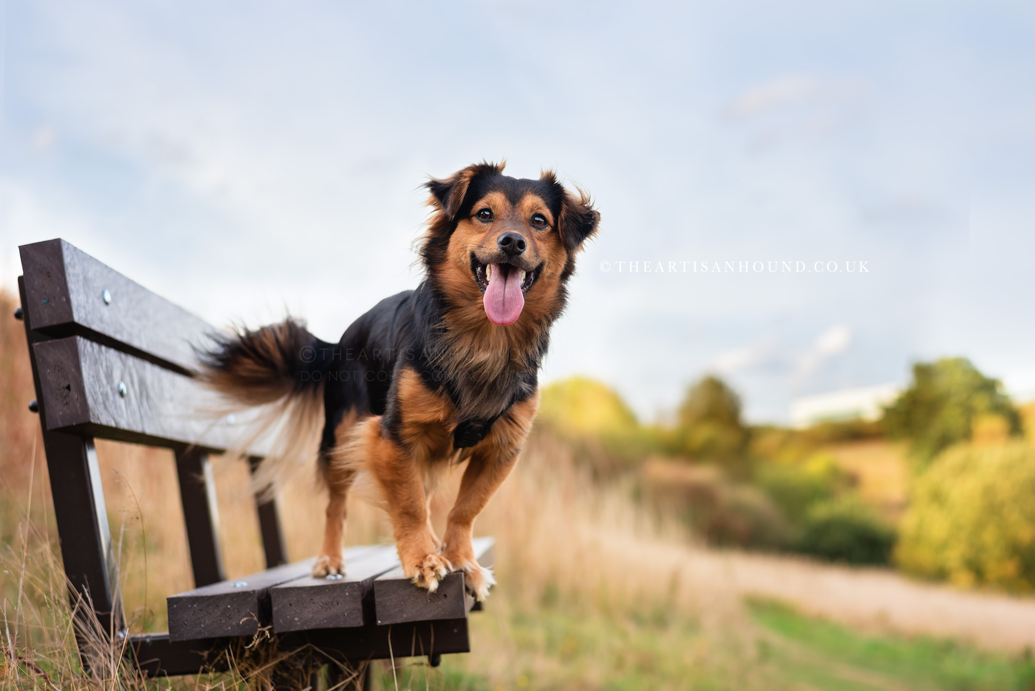 kettering dog photographer 1028