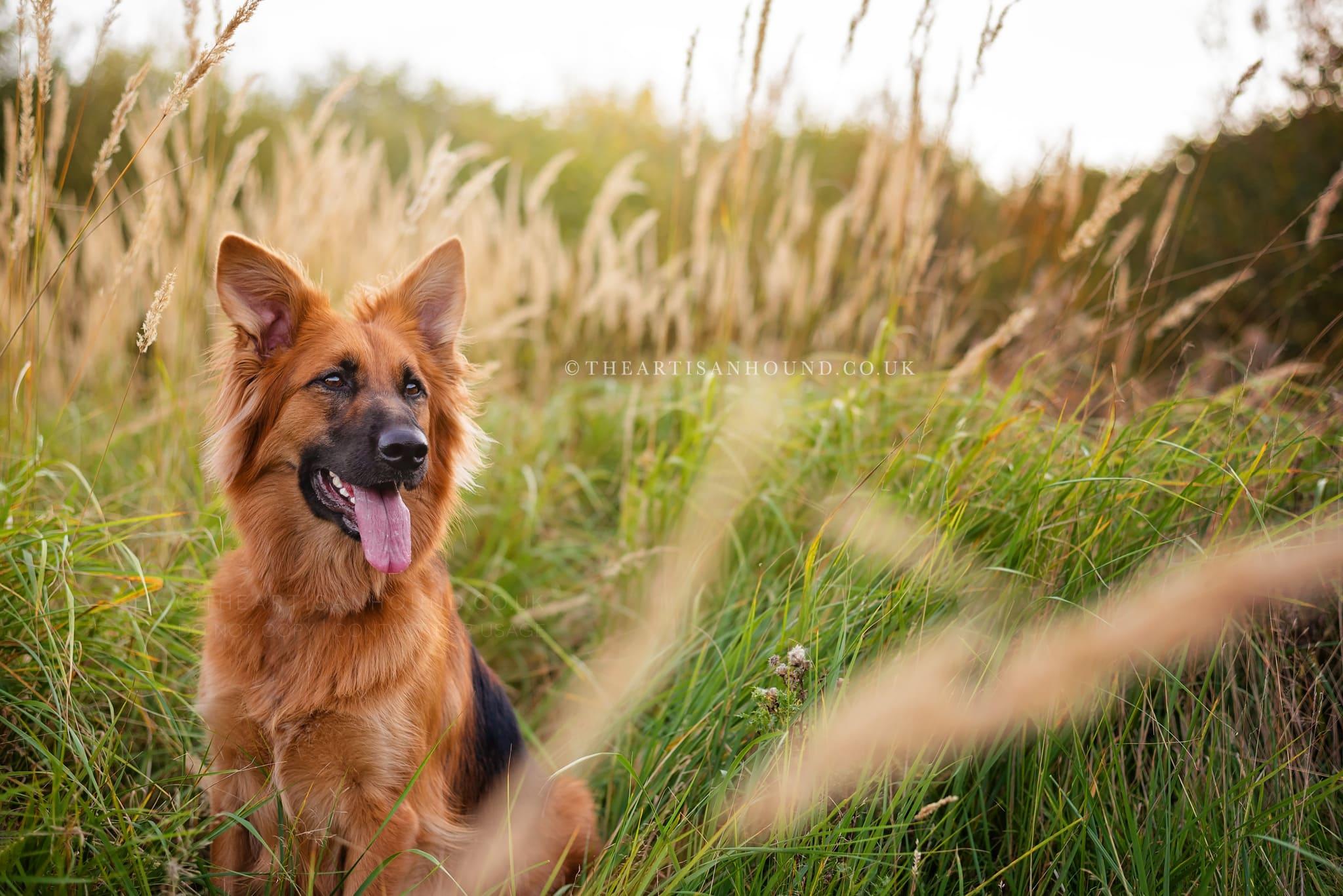 kettering dog photographer 1092