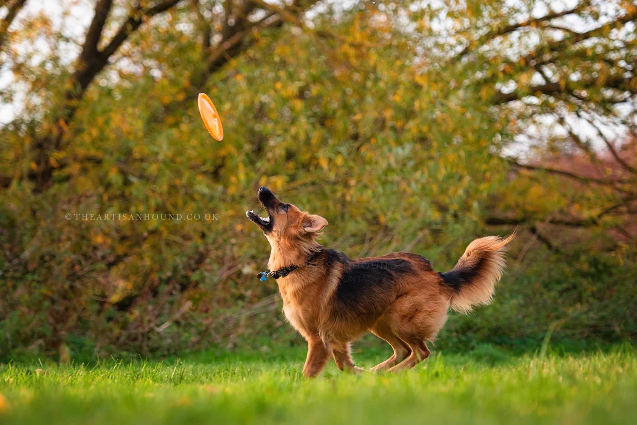 kettering dog photographer 1173