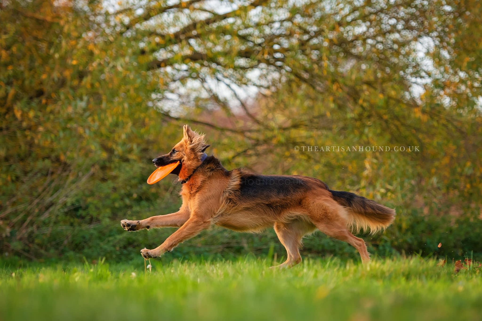 kettering dog photographer 1204