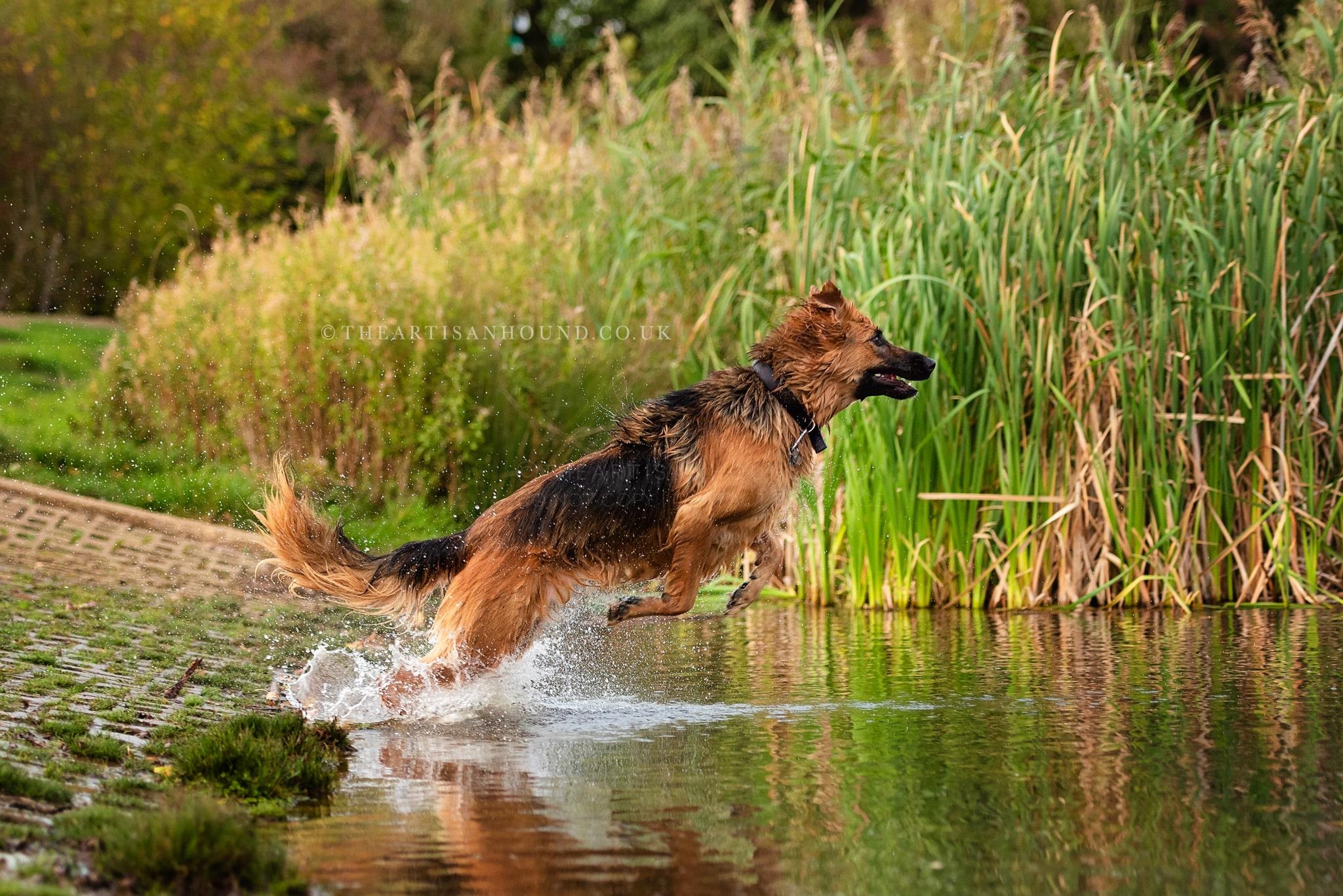 kettering dog photographer 1313