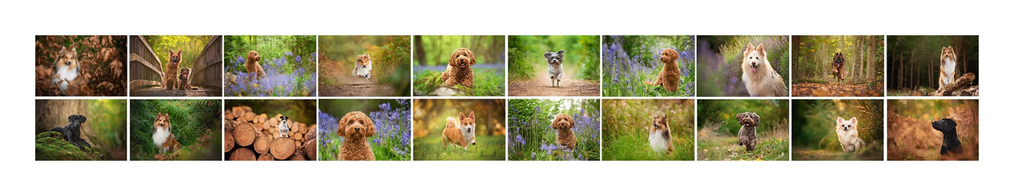 Josie Baughan Dog Photographer MPA Qualification Panel
