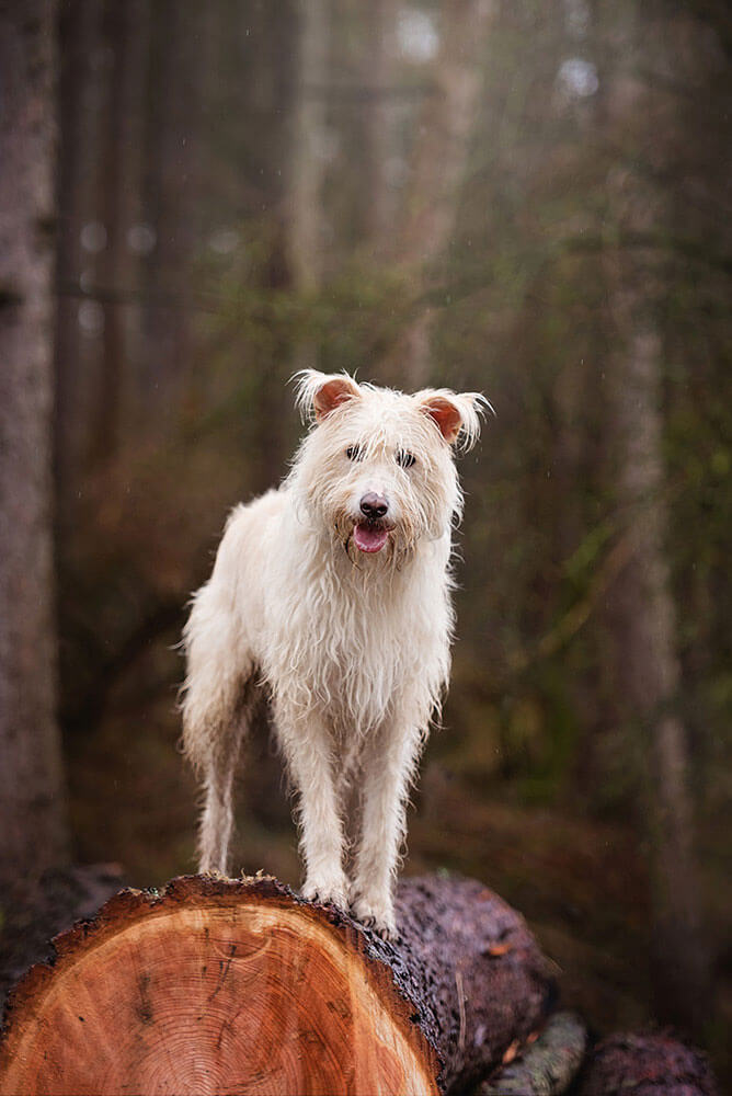 Scruffy rescue dog standing on wood pile
