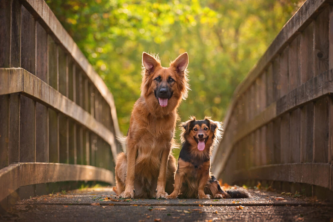 Two crossbreed dogs sitting on bridge in Kettering