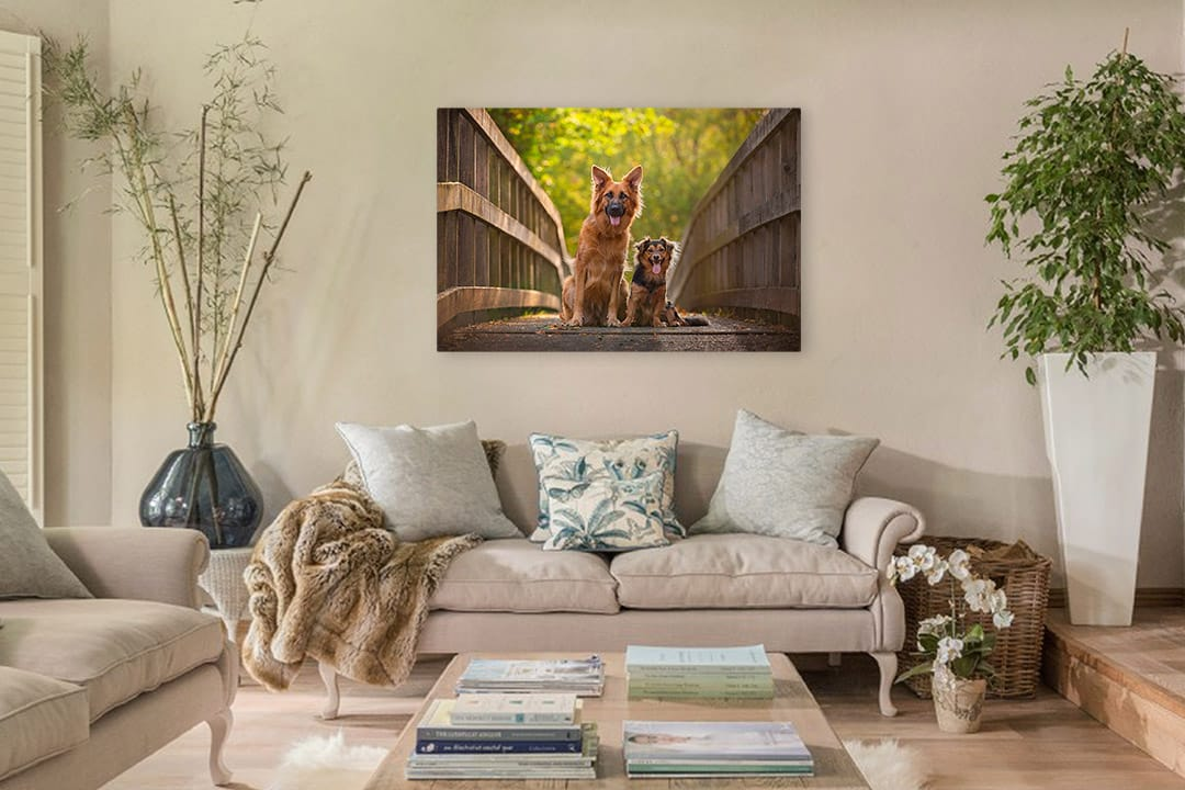 Acrylic print of two dogs hanging above sofa in lounge