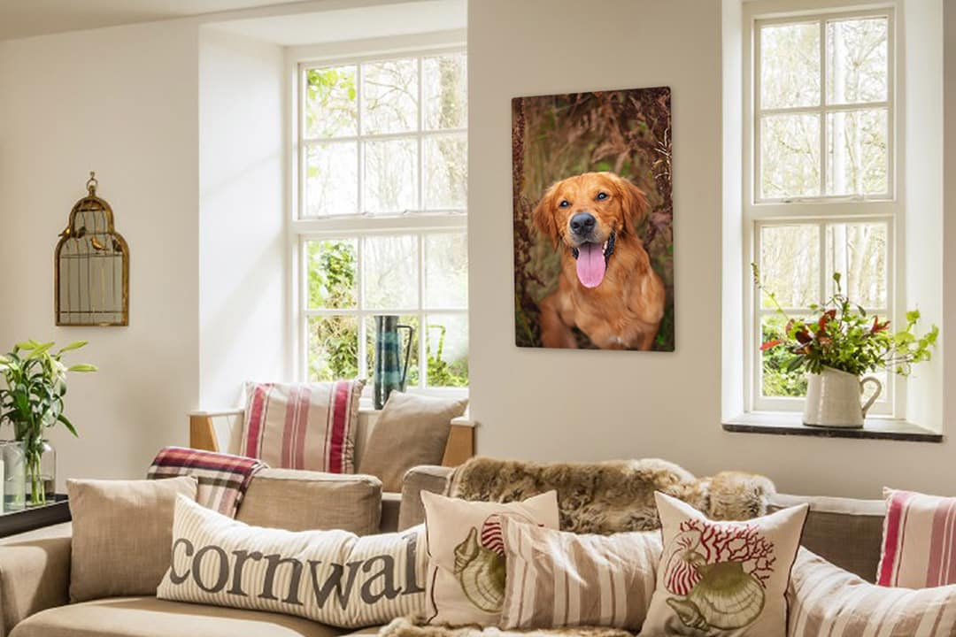 acrylic print of golden retriever hanging on living room wall