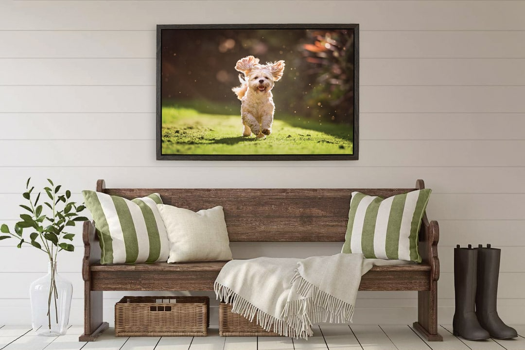 Framed canvas of puppy hanging above bench